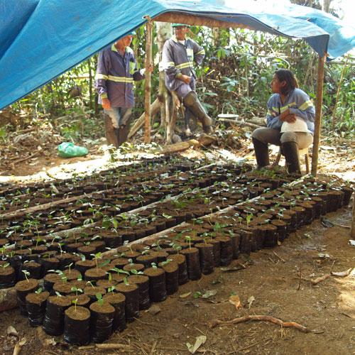 amazon rainforest restoration after mining