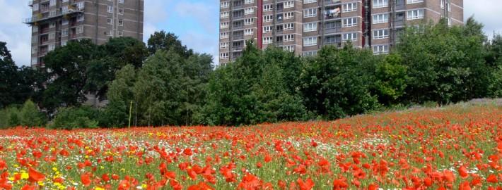 Liverpool poppies, Landlife